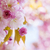 Pink cherry blossoms in spring orchard stock photo © elenaphoto