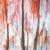 jesienią · jezioro · brzegu · dwa · ontario - zdjęcia stock © elenaphoto