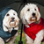 Dressed up dogs under umbrella stock photo © elenaphoto