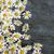 fiori · erbe · fiore · erbe · arancione - foto d'archivio © elenaphoto