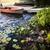 rowboat at lake shore at dusk stock photo © elenaphoto