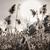 自然 · 光 · 竹 · 工場 · 反射 · ライブ - ストックフォト © elenaphoto
