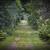 suciedad · tema · forestales · árboles · árbol · paisaje - foto stock © elenaphoto