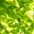 yeşil · bahar · yaprakları · ağaç · güneş · doğal - stok fotoğraf © elenaphoto