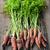 fresco · cenouras · jardim · mão · monte - foto stock © elenaphoto