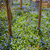 tapete · azul · flores · primavera · floresta · panorama - foto stock © elenaphoto