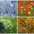 four · seasons · güneş · yaprak · yaz · kış · sonbahar - stok fotoğraf © elenarts