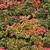 желтый · лист · забор · лес · природы - Сток-фото © elenarts
