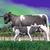 fekete · tehén · közelkép · farm · mezőgazdasági · ipar - stock fotó © elenarts
