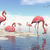 flock of pink flamingos   3d render stock photo © elenarts