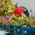Санторини · Греция · красочный · цветок · лет · синий - Сток-фото © ElinaManninen