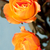 narancs · rózsák · közelkép · gyönyörű · stúdiófelvétel · levél - stock fotó © ElinaManninen