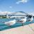 seagulls and sydney harbour bridge stock photo © elinamanninen