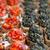 bruschetta · aperitivos · tomates · festa · pão - foto stock © ElinaManninen