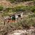 donkey on gramvousa island stock photo © elisanth