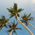 tropical coconut palm trees on clear blue sky background stock photo © elisanth
