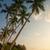 tropisch · strand · retro · palmbomen · hemel · achtergrond · bomen - stockfoto © elisanth