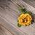 steeg · tuin · sepia · bloem · blad - stockfoto © elisanth