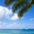 folhas · de · palmeira · oceano · praia · Havaí · céu - foto stock © EllenSmile