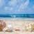 conchas · praia · poucos · praia · água · mar - foto stock © EllenSmile