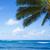 ヤシの葉 · 海 · ビーチ · ハワイ · 空 - ストックフォト © EllenSmile