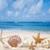 conchas · praia · poucos · praia · água · natureza - foto stock © EllenSmile