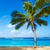 ヤシの木 · 砂浜 · ハワイ · ツリー · 砂の - ストックフォト © ellensmile