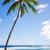 ヤシの木 · 海 · ツリー · ハワイ · 空 - ストックフォト © EllenSmile