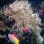 clown · poissons · isolé · blanche - photo stock © elnur