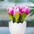 amarelo · tulipa · flores · primavera - foto stock © elnur