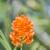orquídeas · florecer · pintura · brillante · flor · primavera - foto stock © elnur