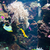 piranha · halfajok · akvárium · trópusi · édesvíz · hal - stock fotó © elnur