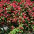 Bush · roses · lumineuses · été · jour · fleurs - photo stock © elnur