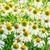 tuin · groene · daisy · kleur · witte · gazon - stockfoto © elnur
