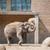 elefánt · állatkert · nyár · nap · természet · háttér - stock fotó © elnur