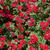 Rood · rozen · boeket · donkere · Rood · rose - stockfoto © elnur