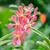rosa · orchidea · fiori · biglietto · d'auguri · design · floreale - foto d'archivio © elnur