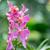 Purple · орхидеи · цветы · цветок · воды · свадьба - Сток-фото © elnur