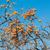 柿 · 果物 · 白 · ツリー · 食品 · 自然 - ストックフォト © elnur