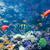 клоуна · рыбы · Nice · коралловые · морем - Сток-фото © elnur