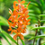 turuncu · orkide · şube · taze · çiçekler · pot - stok fotoğraf © elnur