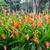 heliconia flowers in the garden stock photo © elnur