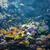 hal · citromsárga · trópusi · Vörös-tenger · természet · tenger - stock fotó © elnur