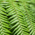 close up of fern leaves stock photo © elnur