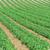 フィールド · 写真 · 美しい · ジャガイモ · 食品 - ストックフォト © elnur