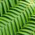 tropical · verde · planta · folha · textura - foto stock © elnur