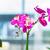 orchidea · virágcserép · otthon · kert · háttér · szín - stock fotó © elnur
