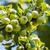 napos · gyümölcsfa · kert · gyönyörű · friss · rózsaszín - stock fotó © elnur