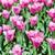 tulipán · ültet · fehér · konyha · törölköző · előkészített - stock fotó © elnur