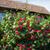 floral · Bush · belle · pourpre · fleurs · résumé - photo stock © elnur